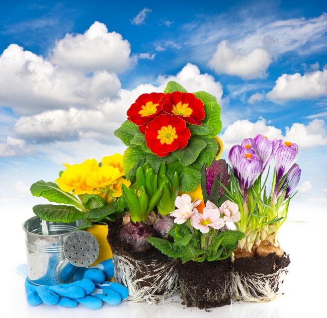 花朵盆栽图片 >>